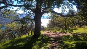 With LATITUR on San Martin de los Andes you can make Trekking Guiado: Mirador Bandurrias e Islita
