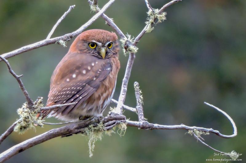 In San Martin de los Andes, Neuquén, Argentina you can Observación de Aves en la Laguna Rosales with LATITUR