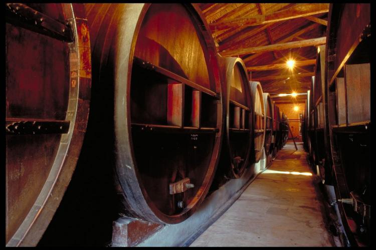 In San Martín 400-300, M5507 Luján de Cuyo, Mendoza, Argentina you can Excursión a bodegas y fábrica de aceite de oliva with LATITUR