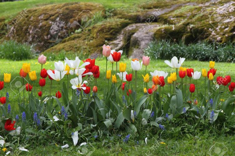 In Plaza San Martín, San Martin de los Andes, Neuquén, Argentina you can Gardening por Parques y Jardines with LATITUR