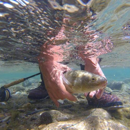In Villa La Angostura, Neuquén, Argentina you can Aventura de pesca a laguna de montaña with LATITUR