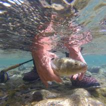 With LATITUR on Villa La Angostura you can make Aventura de pesca a laguna de montaña