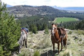 In Pasaje Trahunco Abajo, San Martin de los Andes, Neuquén, Argentina you can Cabalgata hasta base de Cerro Chapelco - 4 horas with LATITUR
