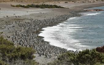 With LATITUR on Punta Tombo, Chubut, Argentina you can make Excursión a Punta Tombo con Isla Escondida
