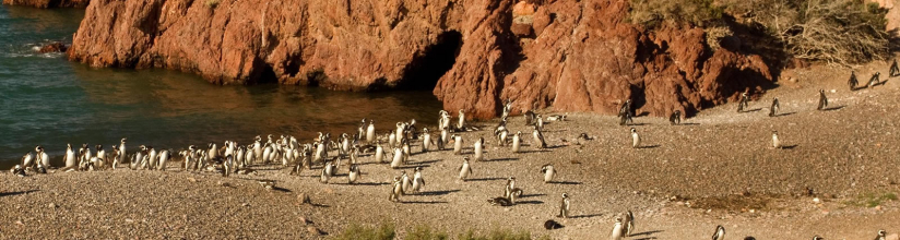 In Punta Tombo, Chubut, Argentina you can Excursión a Punta Tombo con Isla Escondida with LATITUR