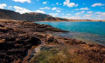 With LATITUR on Península Valdés, Chubut, Argentina you can make Excursión a Península de Valdés