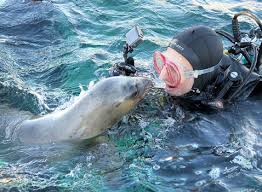 In Punta Loma, Puerto Madryn, Chubut Province, Argentina you can Snorkeling con lobos marinos en Punta Loma with LATITUR