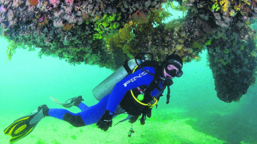 In Puerto Madryn, Chubut, Argentina you can Buceo de Bautismo Submarino en Puerto Madryn with LATITUR