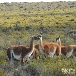 In Península Valdés, Chubut, Argentina you can Excursión a Península de Valdés with LATITUR