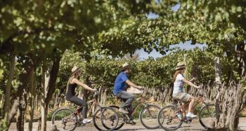 With LATITUR on Mendoza you can make Bodega, Olivícola y Cervecería en Bicicleta