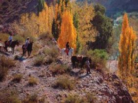 With LATITUR on San Rafael you can make Cabalgata de 1 hora en San Rafael  Mendoza